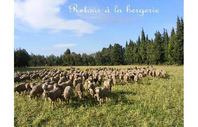Camping Les biens neufs 3 - Salon-de-Provence
